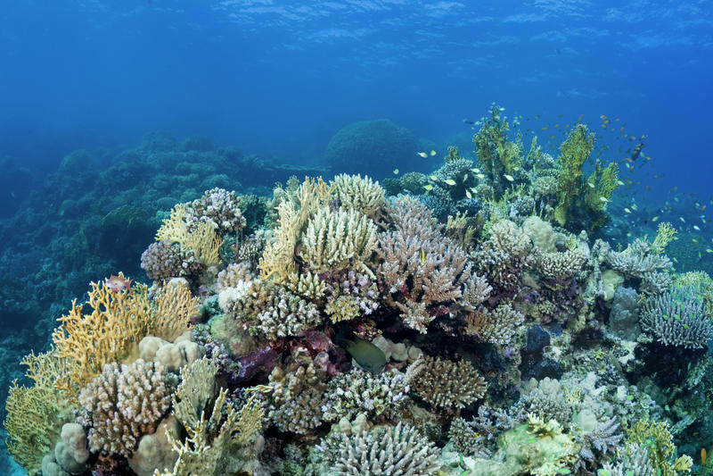 όμορφη κοραλλιογενής ύφ&alph στοκ φωτογραφίες με δικαίωμα ελεύθερης χρήσης