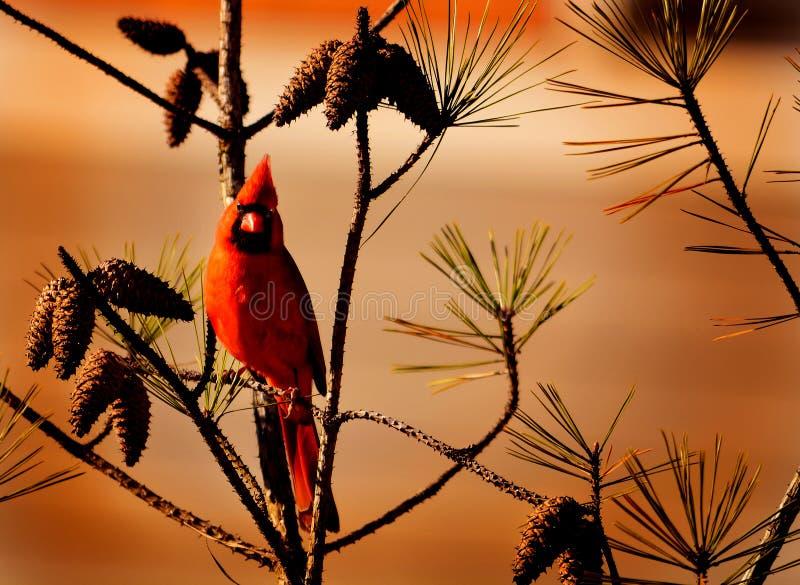 Όμορφη κόκκινη συνεδρίαση πουλιών στον κλάδο στοκ εικόνα με δικαίωμα ελεύθερης χρήσης