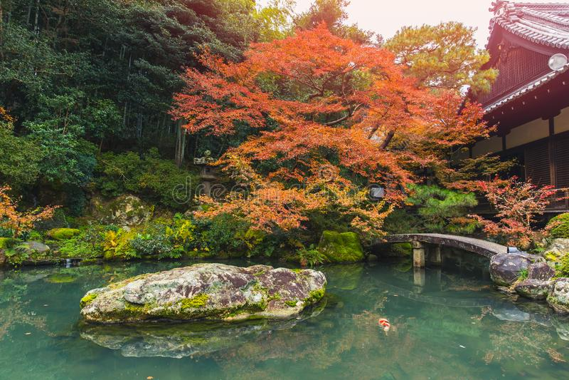 Όμορφη λίμνη φθινοπώρου με τον κήπο της Ιαπωνίας ψαριών koi στοκ φωτογραφίες με δικαίωμα ελεύθερης χρήσης
