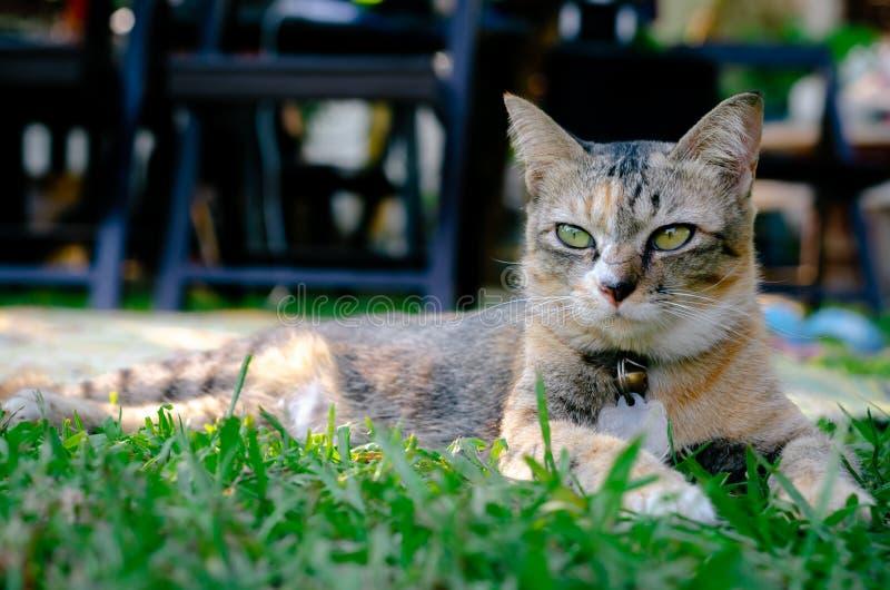 Όμορφη λατρευτή γάτα χρώματος λεοπαρδάλεων στοκ φωτογραφίες με δικαίωμα ελεύθερης χρήσης