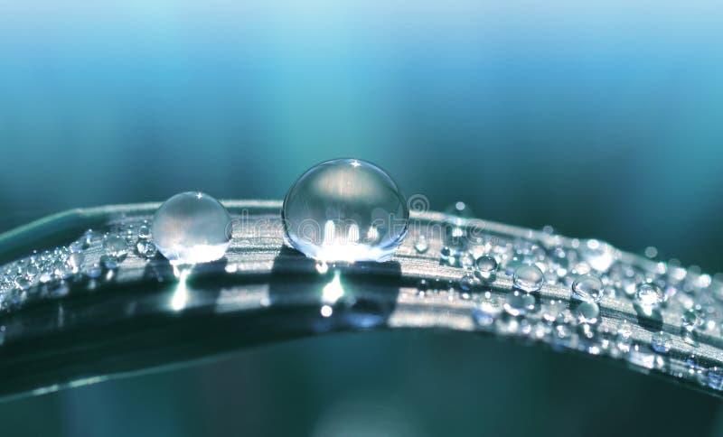 Όμορφη μεγάλη διαφανής πτώση της δροσιάς νερού στενό σε επάνω χλόης στοκ εικόνες με δικαίωμα ελεύθερης χρήσης