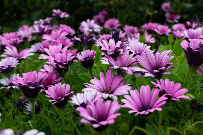 Όμορφη μητέρα φύση στοκ εικόνες