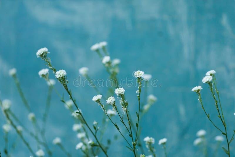 Όμορφη μικρή άσπρη κινηματογράφηση σε πρώτο πλάνο λουλουδιών το καλοκαίρι στοκ φωτογραφία με δικαίωμα ελεύθερης χρήσης