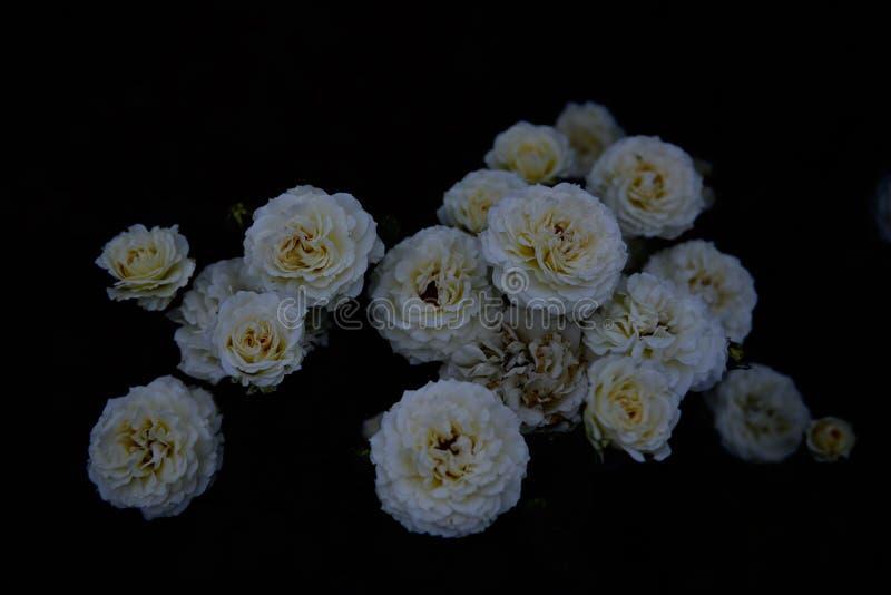 Όμορφη μορφή που διαμορφώνεται από πολλά άσπρα λουλούδια στοκ εικόνα