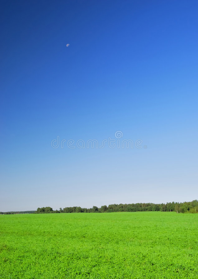 όμορφη μπλε σαφής χλόη στοκ εικόνες