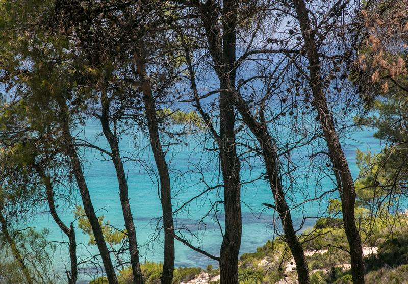 Όμορφη μπλε τυρκουάζ θάλασσα και υψηλά δέντρα κωνοφόρων στοκ εικόνες