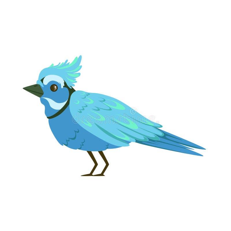 Όμορφη μπλε ζωηρόχρωμη διανυσματική απεικόνιση πουλιών ελεύθερη απεικόνιση δικαιώματος