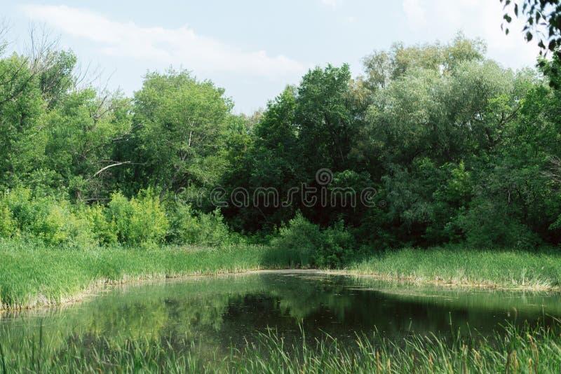 Όμορφη μυθική θέση μεταξύ των δέντρων λίμνη με το βρύο στοκ εικόνα με δικαίωμα ελεύθερης χρήσης