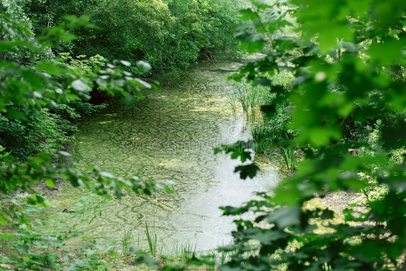 Όμορφη μυθική θέση μεταξύ των δέντρων λίμνη με το βρύο στοκ εικόνες με δικαίωμα ελεύθερης χρήσης