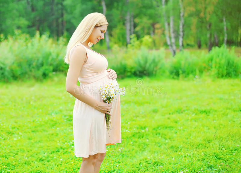 Όμορφη νέα έγκυος γυναίκα με τα λουλούδια chamomiles το καλοκαίρι στοκ φωτογραφία με δικαίωμα ελεύθερης χρήσης
