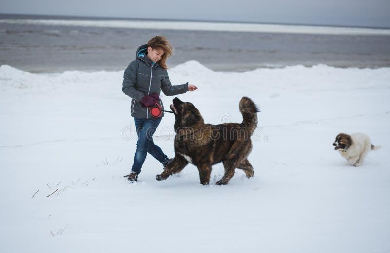 Όμορφη νέα γυναίκα και δύο κουτάβια που τρέχουν στη χειμερινή παραλία Ρομαντικές διακοπές στην παραλία στοκ εικόνες