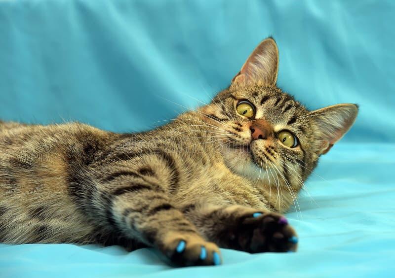 Όμορφη νέα τιγρέ γάτα στοκ εικόνα