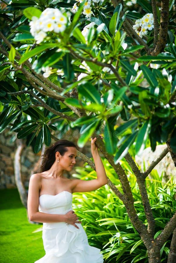 Όμορφη νέα τοποθέτηση νυφών στο γαμήλιο φόρεμα με το τροπικό δέντρο στοκ φωτογραφία με δικαίωμα ελεύθερης χρήσης