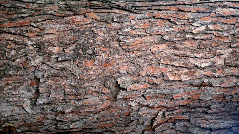 Όμορφη ξύλινη σύσταση στοκ φωτογραφία με δικαίωμα ελεύθερης χρήσης