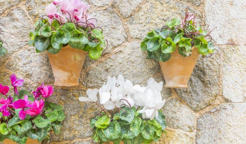 Όμορφη οδός σε Valldemossa με το παραδοσιακό decorati λουλουδιών στοκ φωτογραφία