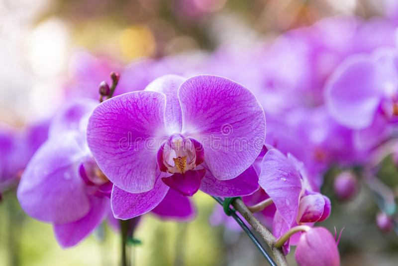 Όμορφη ορχιδέα κινηματογραφήσεων σε πρώτο πλάνο πέρα από το θολωμένο υπόβαθρο κήπων λουλουδιών στοκ φωτογραφία με δικαίωμα ελεύθερης χρήσης