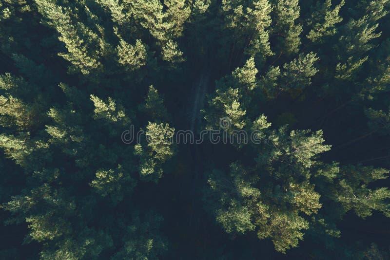 Όμορφη πανοραμική φωτογραφία πέρα από τη δασική τοπ άποψη ανώτατων πεύκων στοκ εικόνα