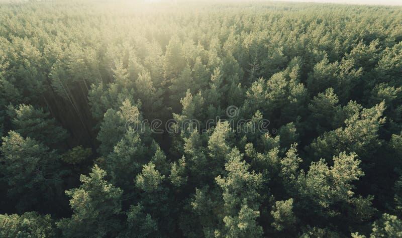 Όμορφη πανοραμική φωτογραφία πέρα από τη δασική τοπ άποψη ανώτατων πεύκων στοκ εικόνα με δικαίωμα ελεύθερης χρήσης
