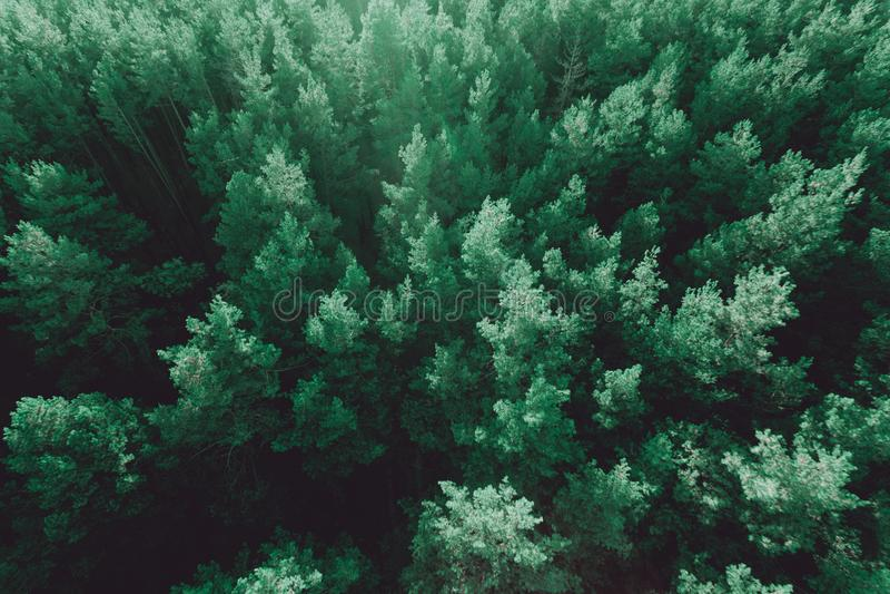 Όμορφη πανοραμική φωτογραφία πέρα από τη δασική τοπ άποψη ανώτατων πεύκων στοκ εικόνες με δικαίωμα ελεύθερης χρήσης