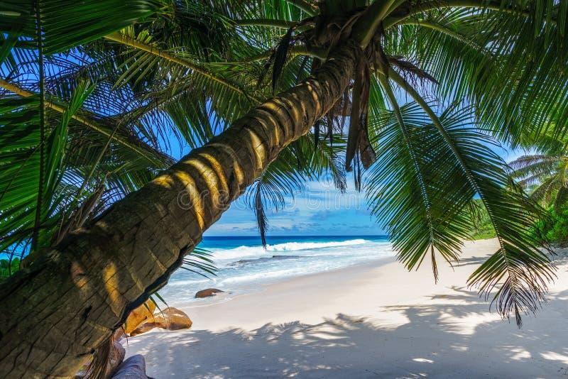 Όμορφη παραλία παραδείσου, anse bazarca, Σεϋχέλλες 5 στοκ εικόνα με δικαίωμα ελεύθερης χρήσης