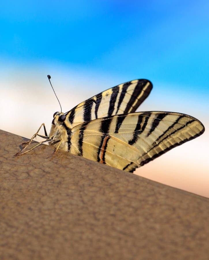 Όμορφη πεταλούδα για την ταπετσαρία στοκ φωτογραφία