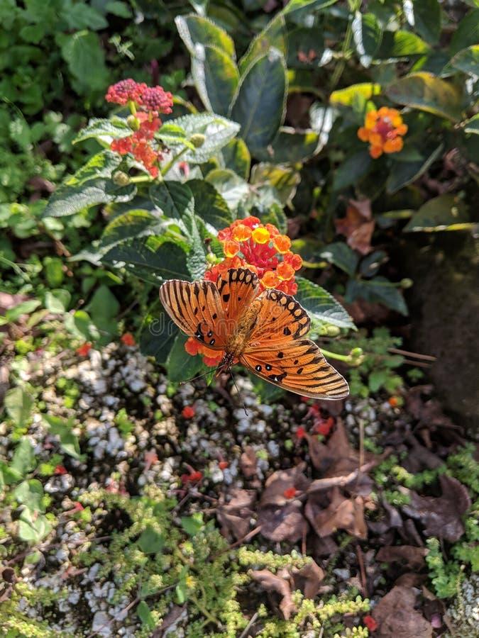 Όμορφη πεταλούδα μια ηλιόλουστη ημέρα της Φλώριδας στοκ εικόνες με δικαίωμα ελεύθερης χρήσης