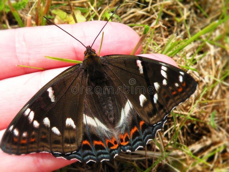 Όμορφη πεταλούδα που στηρίζεται στο χέρι γυναικών στοκ φωτογραφία