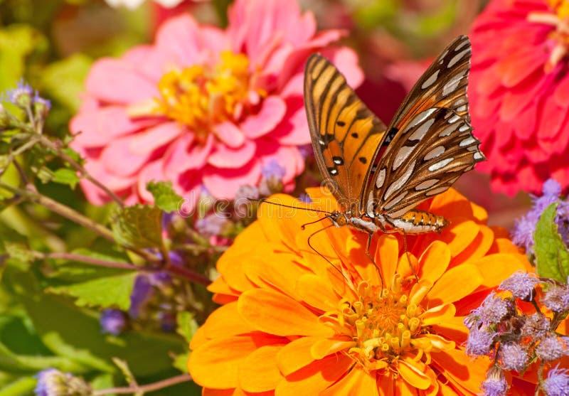 όμορφη πεταλούδα που ταΐζει το fritillary κόλπο στοκ φωτογραφίες