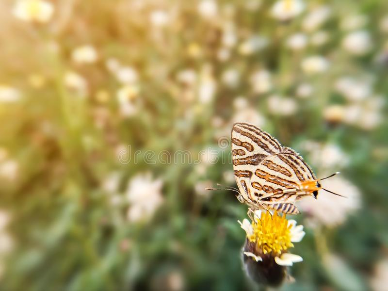 Όμορφη πεταλούδα στη χλόη λουλουδιών και φως του ήλιου κατά τη διάρκεια της ημέρας Θολωμένο φυσικό υπόβαθρο εικόνας στοκ φωτογραφία με δικαίωμα ελεύθερης χρήσης
