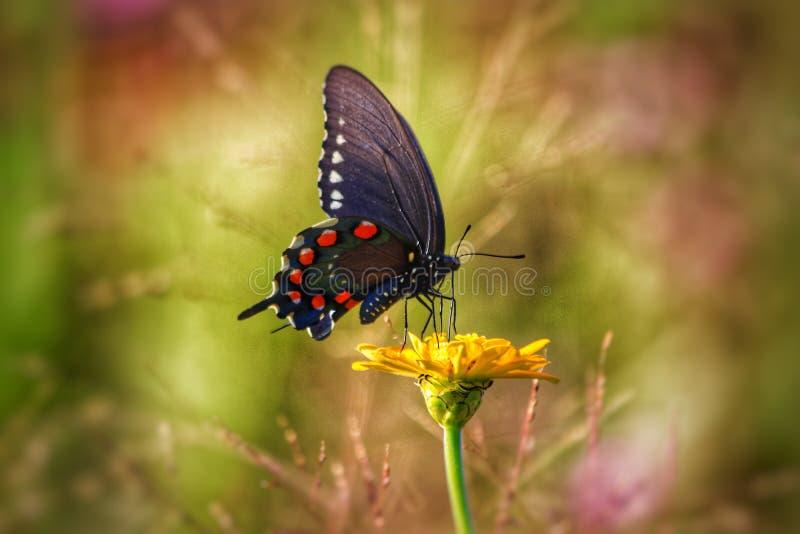 Όμορφη πεταλούδα στοκ εικόνα