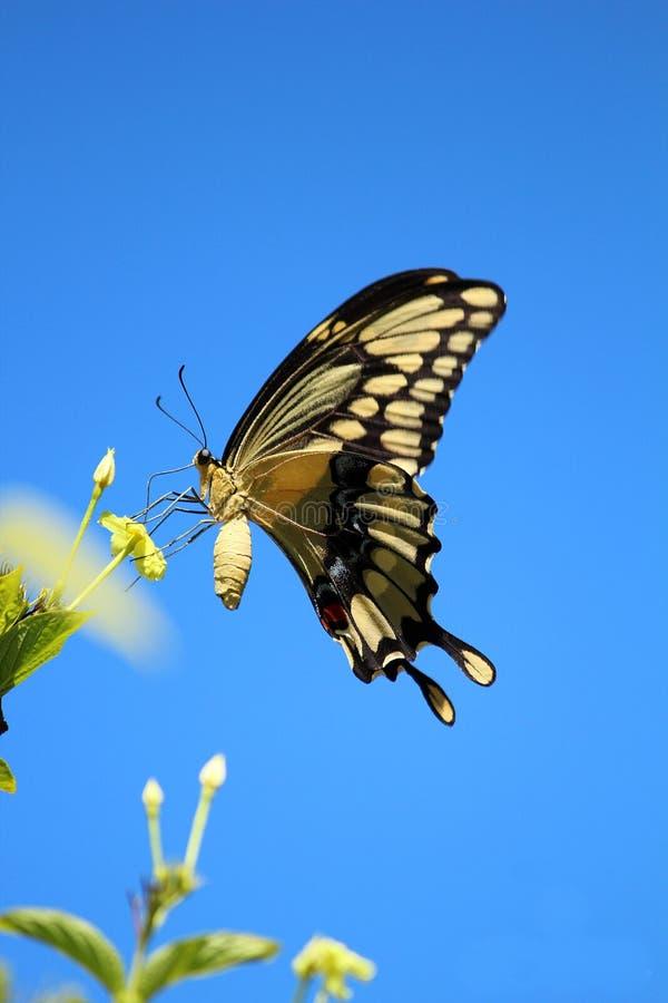 Όμορφη πεταλούδα που προσγειώνεται στο λουλούδι στον ήλιο στοκ φωτογραφία