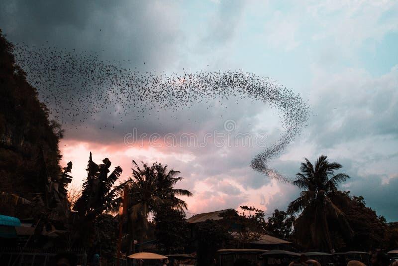 Όμορφη πλατιά νυχτερίδες που πετούν έξω από μια σπηλιά περιτριγυρισμένη από τροπικά δέντρα κατά τη διάρκεια του ηλιοβασίλεμα στοκ φωτογραφία με δικαίωμα ελεύθερης χρήσης