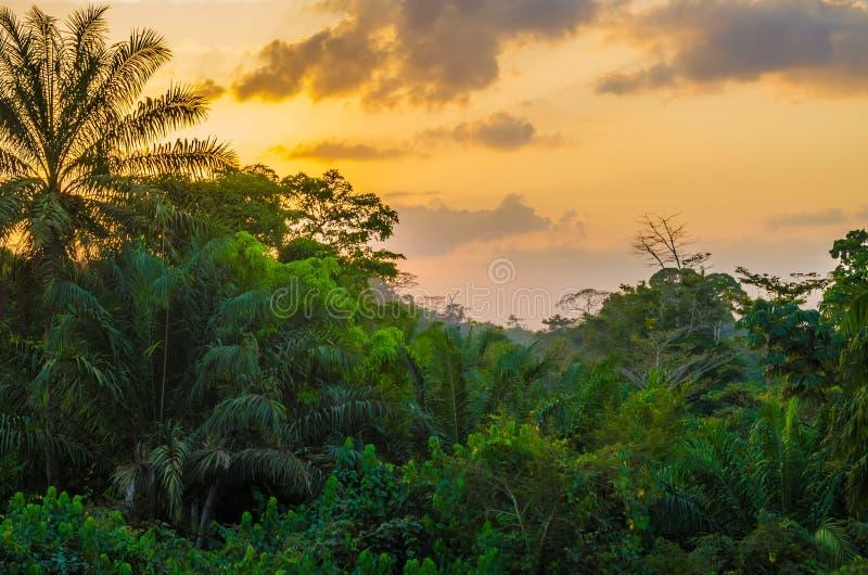 Όμορφη πολύβλαστη πράσινη δύση - αφρικανικό τροπικό δάσος κατά τη διάρκεια του καταπληκτικού ηλιοβασιλέματος, Λιβερία, Δυτική Αφρ στοκ φωτογραφίες με δικαίωμα ελεύθερης χρήσης