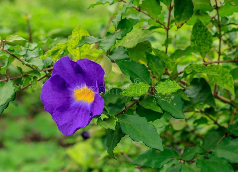 όμορφη πορφύρα λουλουδιών στοκ φωτογραφία με δικαίωμα ελεύθερης χρήσης