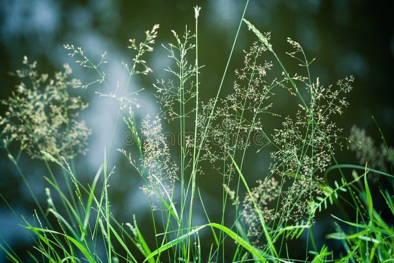 Όμορφη πράσινη κινηματογράφηση σε πρώτο πλάνο σανών το καλοκαίρι στοκ φωτογραφία με δικαίωμα ελεύθερης χρήσης