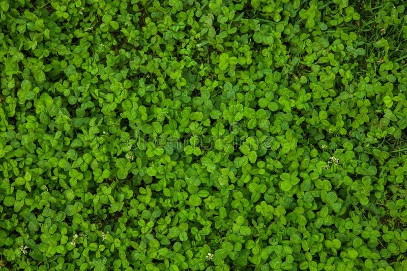 όμορφη πράσινη σύσταση χλόης στοκ φωτογραφίες