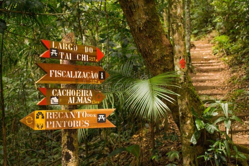 Όμορφη πράσινη φύση στο ατλαντικό τροπικό δάσος, δασικό εθνικό πάρκο Tijuca στοκ εικόνες