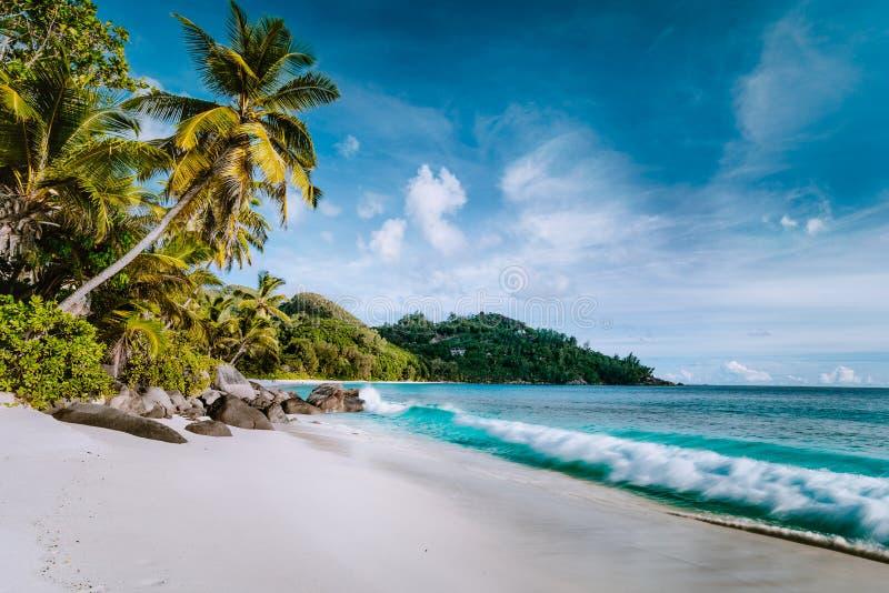 Όμορφη πρόθεση Anse, τροπική παραλία Ωκεάνιος ρόλος κυμάτων στην αμμώδη παραλία με τους φοίνικες καρύδων Mahe, Σεϋχέλλες στοκ εικόνες με δικαίωμα ελεύθερης χρήσης