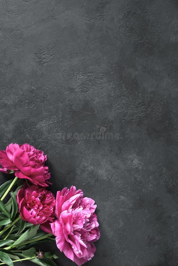 Όμορφη ροδανιλίνη peonies στο σκοτεινό υπόβαθρο πετρών στοκ φωτογραφία με δικαίωμα ελεύθερης χρήσης