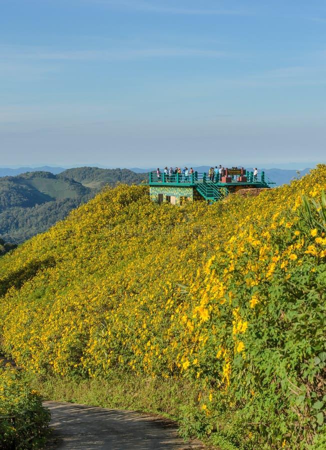 Όμορφη σκηνή φύσης βουνών με τον άγριο μεξικάνικο ηλίανθο val στοκ φωτογραφία με δικαίωμα ελεύθερης χρήσης