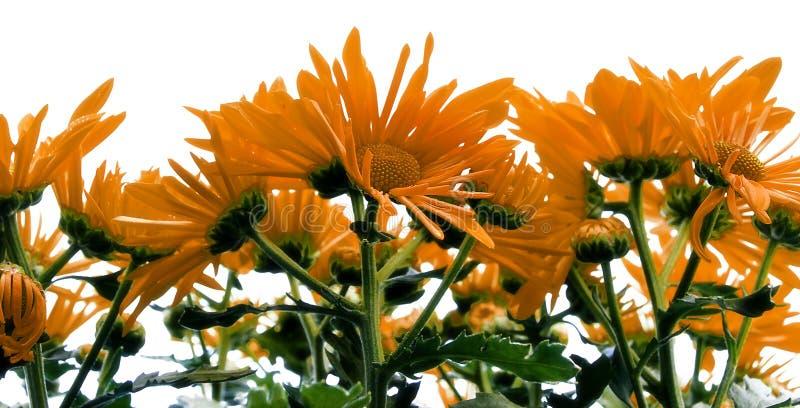 όμορφη στενή άνοιξη λουλο στοκ φωτογραφία