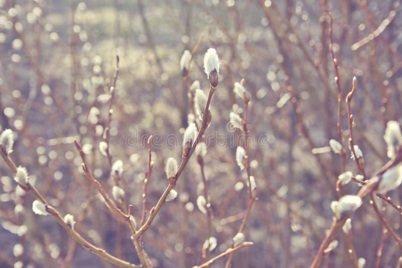 Όμορφη συγκεκριμένη φωτογραφία χειμερινής εποχής Μικροί κλάδοι και άσπρα λουλούδια Καλά φω'τα και χρώματα χειμερινό περιβάλλον De στοκ φωτογραφία με δικαίωμα ελεύθερης χρήσης