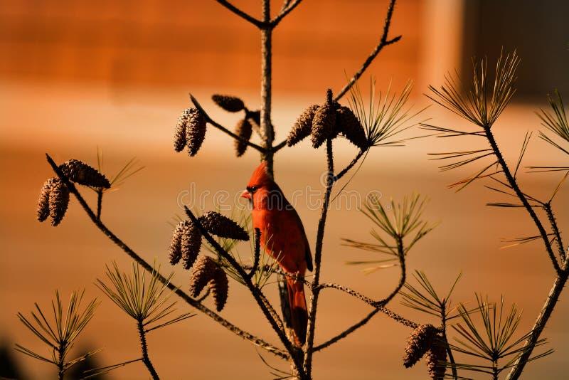 Όμορφη συνεδρίαση πουλιών στον κλάδο στοκ φωτογραφία με δικαίωμα ελεύθερης χρήσης