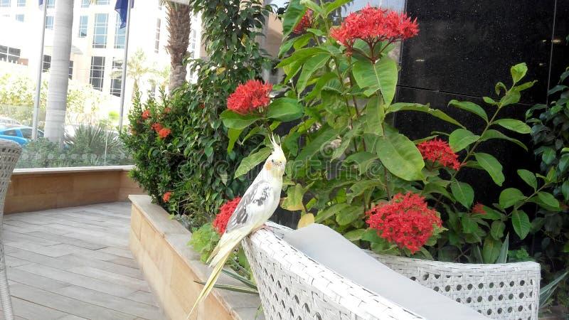 Όμορφη συνεδρίαση πουλιών στοκ εικόνα με δικαίωμα ελεύθερης χρήσης