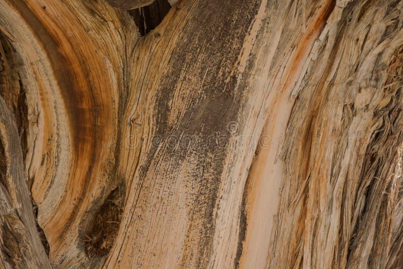 Όμορφη σύσταση υποβάθρου ιουνιπέρων ξύλινη στοκ εικόνα με δικαίωμα ελεύθερης χρήσης