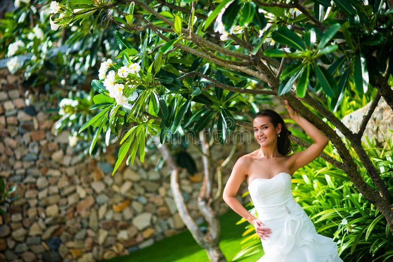 Όμορφη τοποθέτηση νυφών στο γαμήλιο φόρεμα με το τροπικό δέντρο στοκ εικόνες
