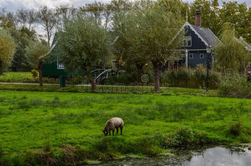 Όμορφη του χωριού κλήση Zaanse Schans κοντά στο Άμστερνταμ στις Κάτω Χώρες στοκ εικόνες