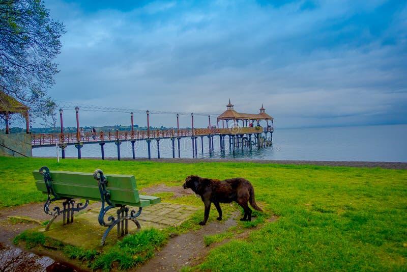 Όμορφη υπαίθρια άποψη ενός σκυλιού κοντά σε μια μεταλλική καρέκλα με μια αποβάθρα της λίμνης Llanquihue πίσω σε Frutillar Bajo, Χ στοκ εικόνα με δικαίωμα ελεύθερης χρήσης