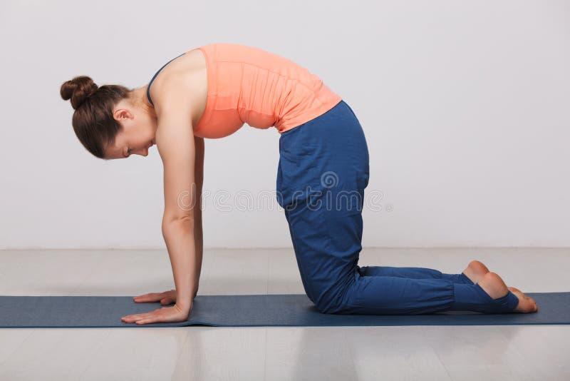 Όμορφη φίλαθλη κατάλληλη γιόγκα πρακτικών γυναικών yogini στοκ εικόνα με δικαίωμα ελεύθερης χρήσης
