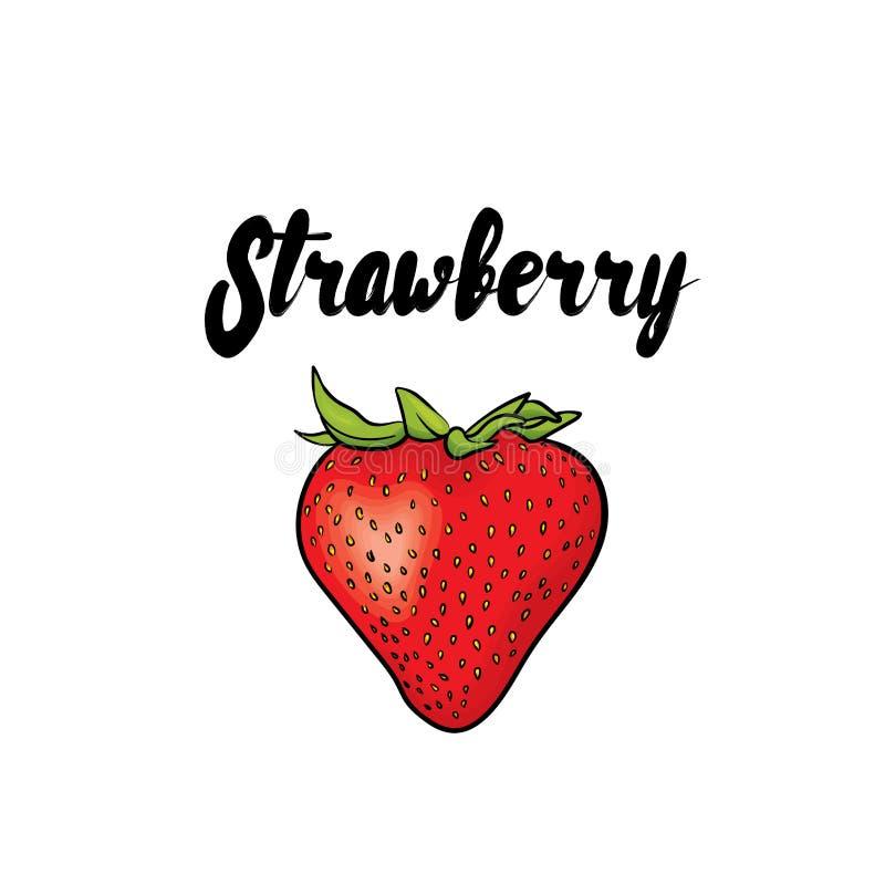 όμορφη φράουλα επίσης corel σύρετε το διάνυσμα απεικόνισης καρποί τροπικοί διανυσματική απεικόνιση